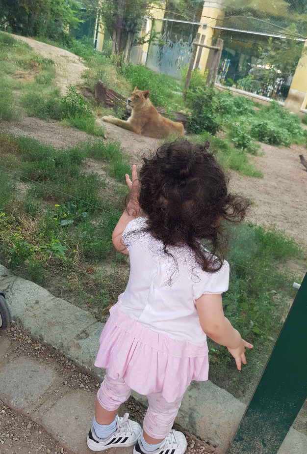 vienna zoo toddler with tiger